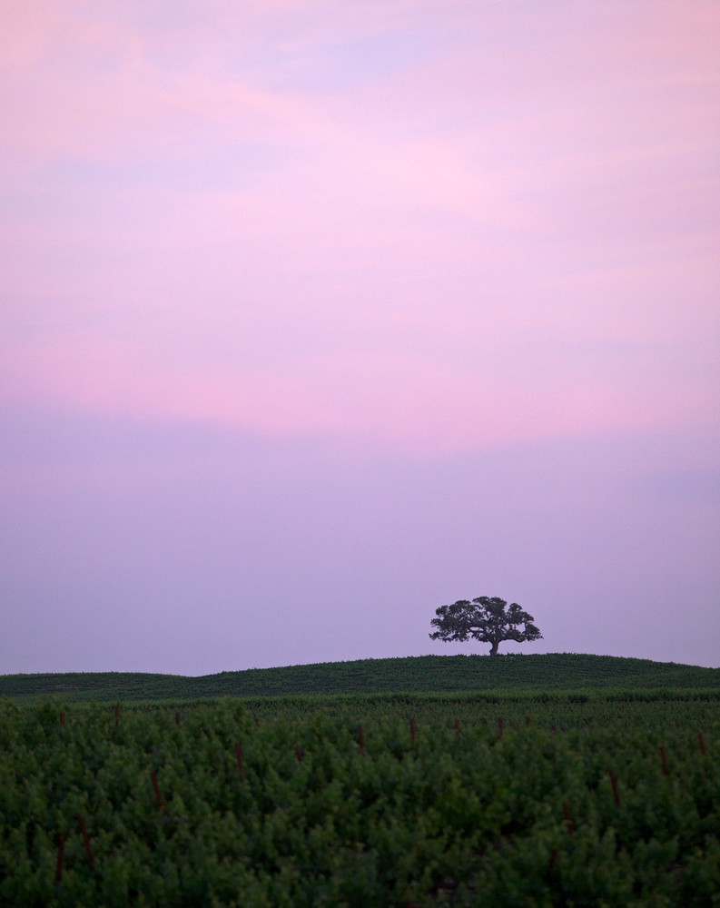 Distant Sundown Oak Photography Art | Josh Kimball Photography