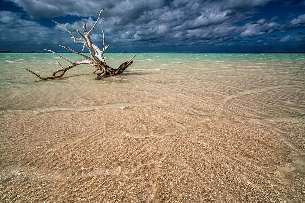 Driftwood Before The Storm Photography Art | Carol Brooks Parker Fine Art Photography