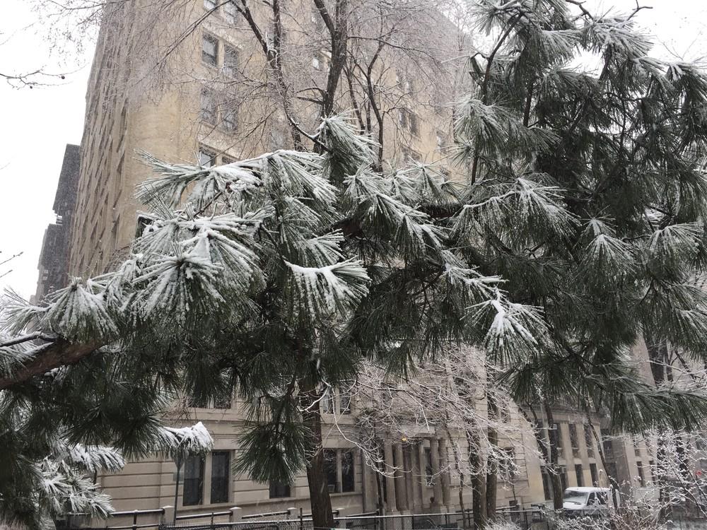 'wintermajesty In Nyc' Art | Cera Arts