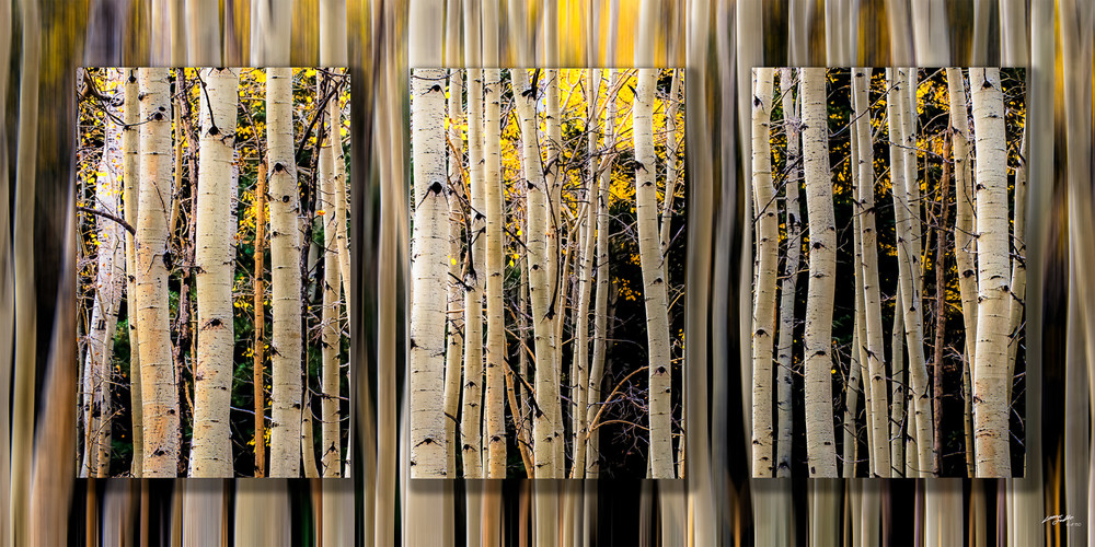 Aspen Trunks Fall Lines 3 Pc 3 D Photography Art | Whispering Impressions