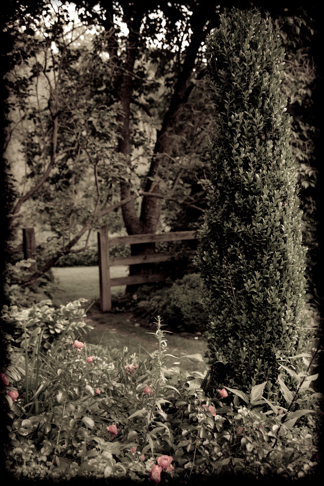 In The Formal Garden #2 Photography Art | David Frank Photography
