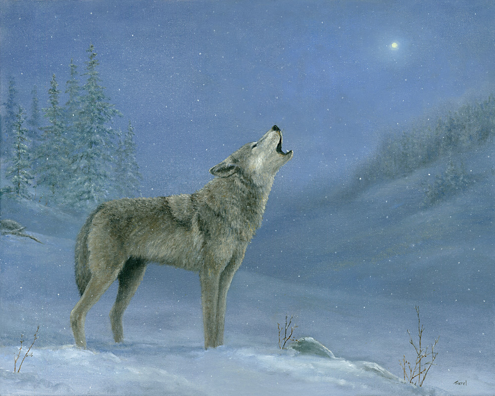 *Gray Wolf Howling At The Moon Art | Tarryl Fine Art