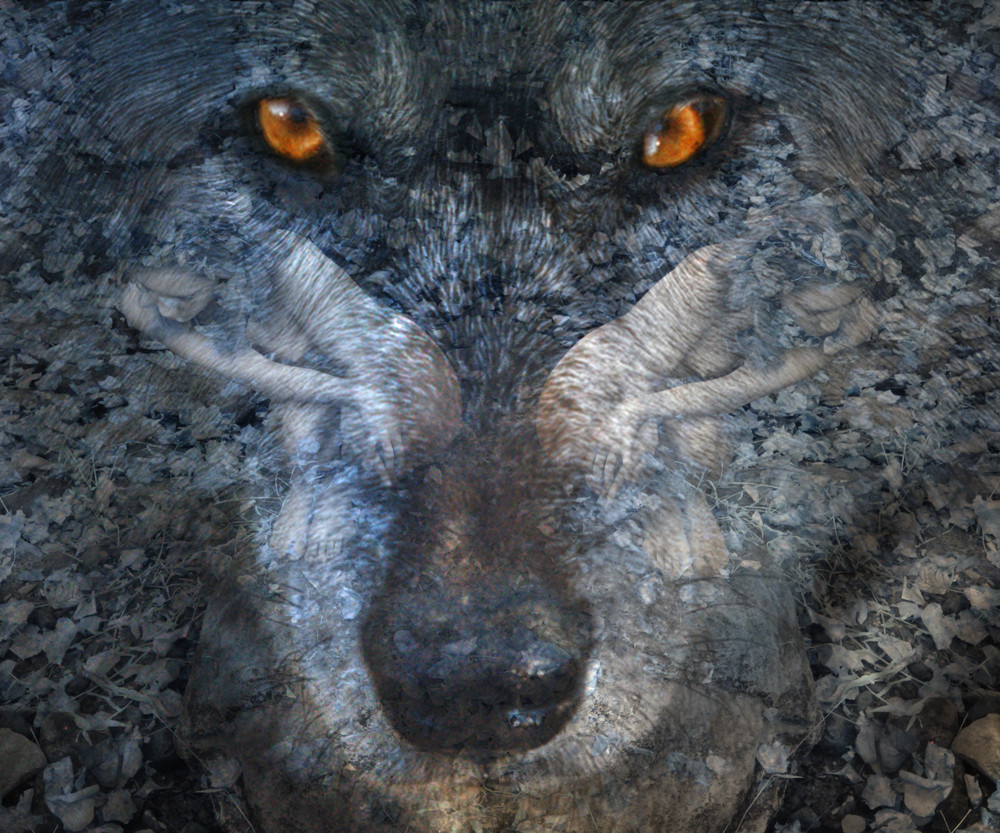 Wolf Eyes Art | artalacarte