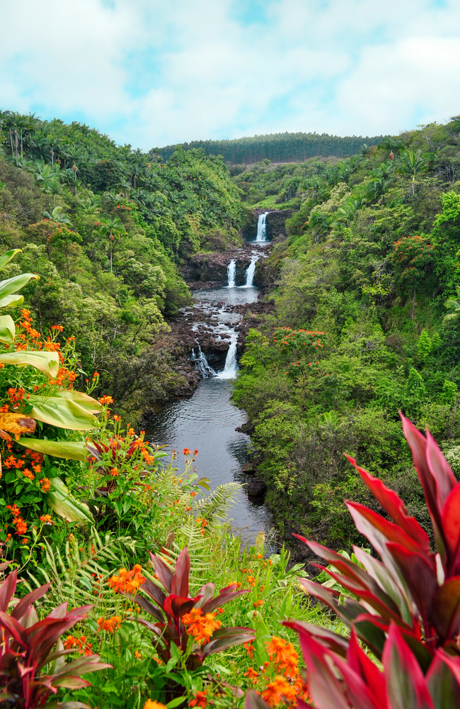 Umauma Falls Photography Art   Bird In Paradise