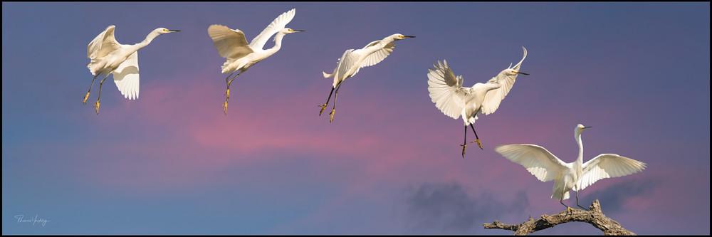 Sticking The Landing Photography Art | Thomas Yackley Fine Art Photography