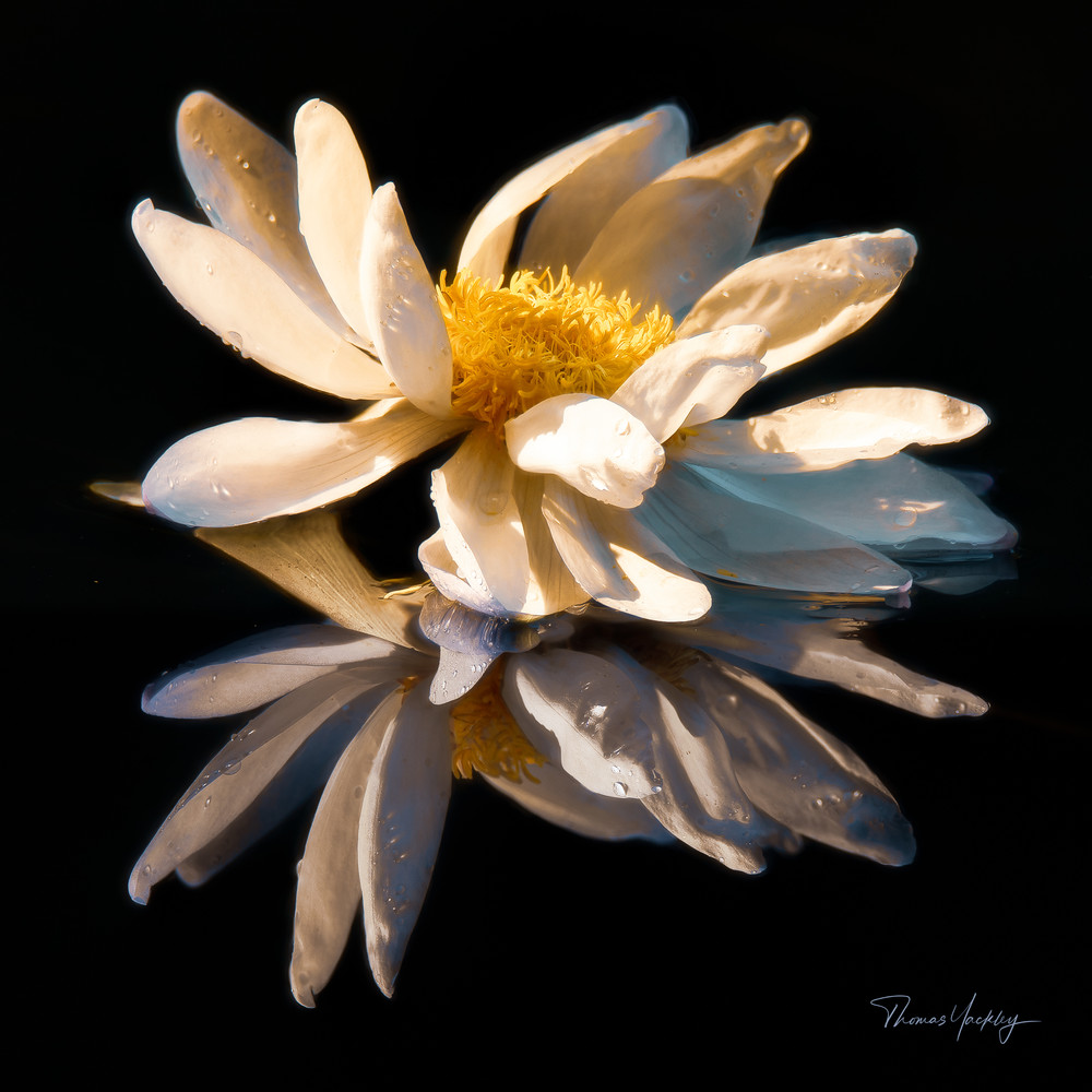 Reflected Glory Photography Art   Thomas Yackley Fine Art Photography