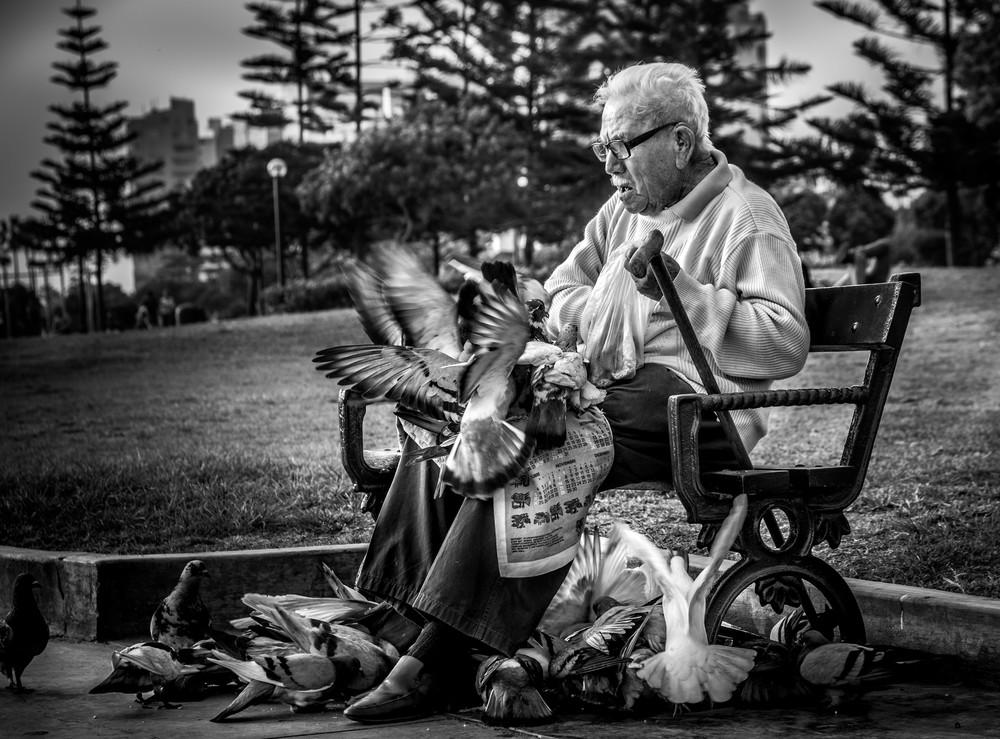 An old  man feeding pigeons in Lima, Peru