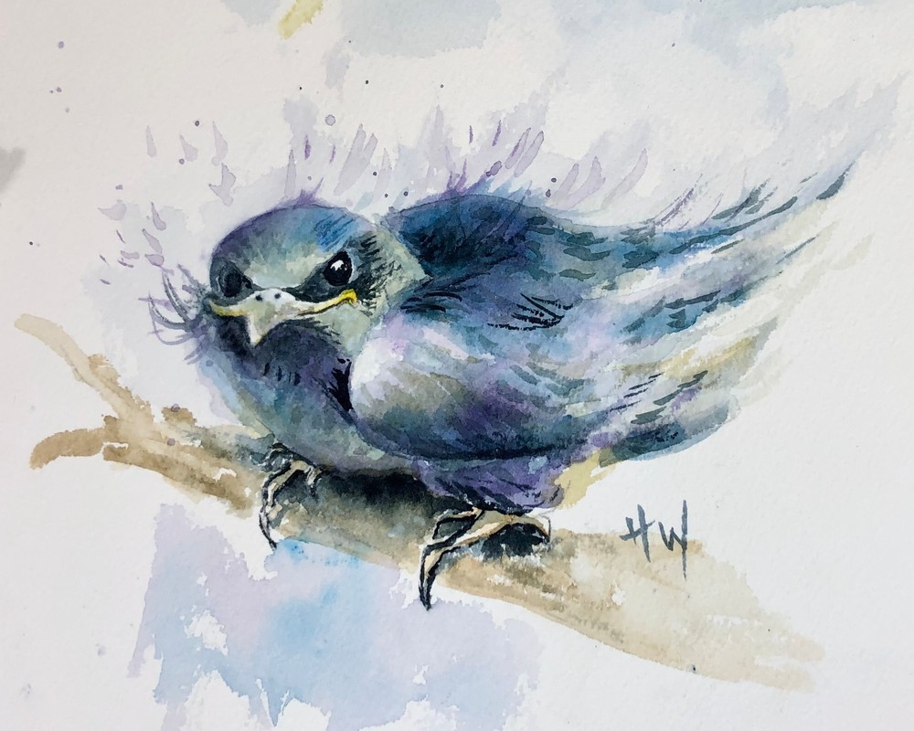 Purple Martin Fledgling watercolor painting