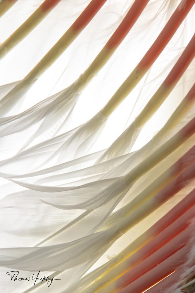 Baby Feathers Photography Art | Thomas Yackley Fine Art Photography