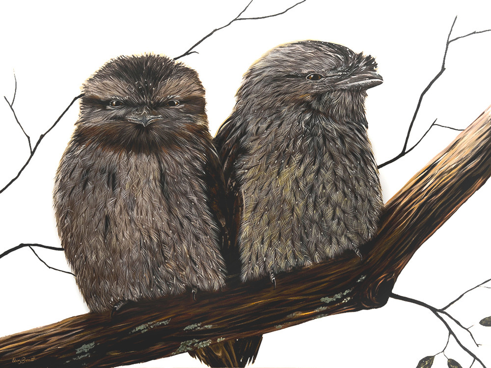 Ted and Tilly - Tawny Frogmouths