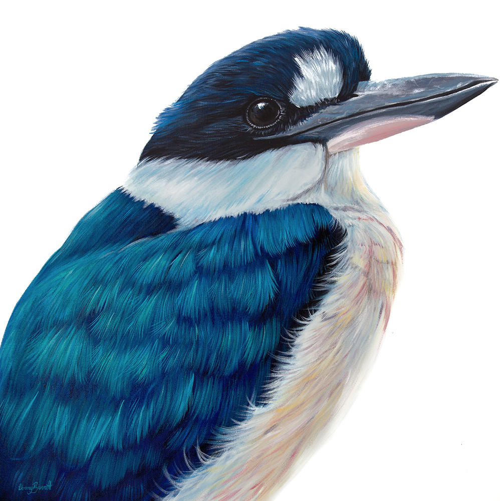 Clancy - Forest Kingfisher
