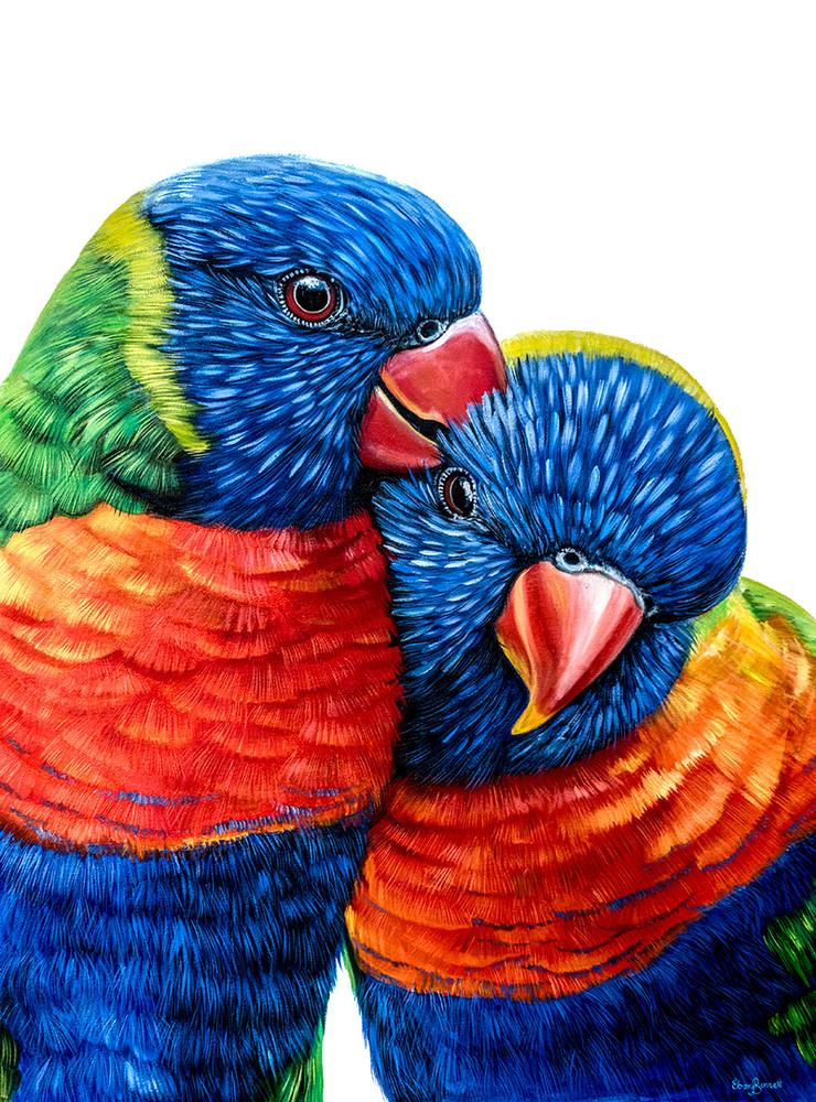 Jeff and Jenny - Rainbow Lorikeets