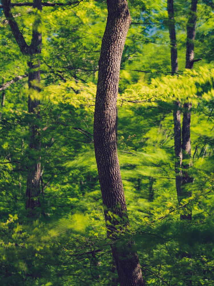 Nature Color 0241 Photography Art | Dan Chung Fine Art
