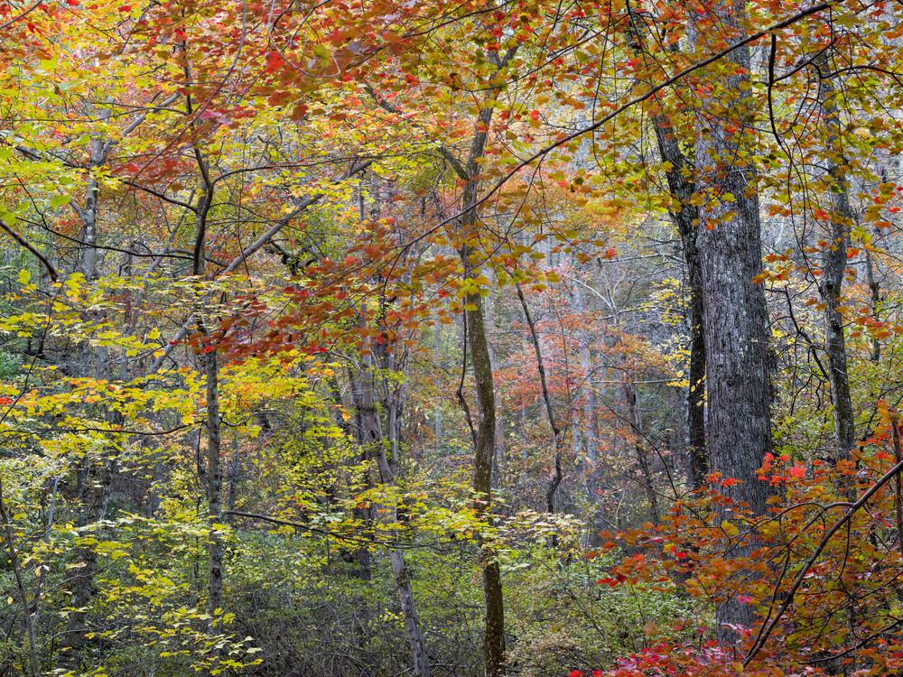 Nature Color 1012 Photography Art | Dan Chung Fine Art