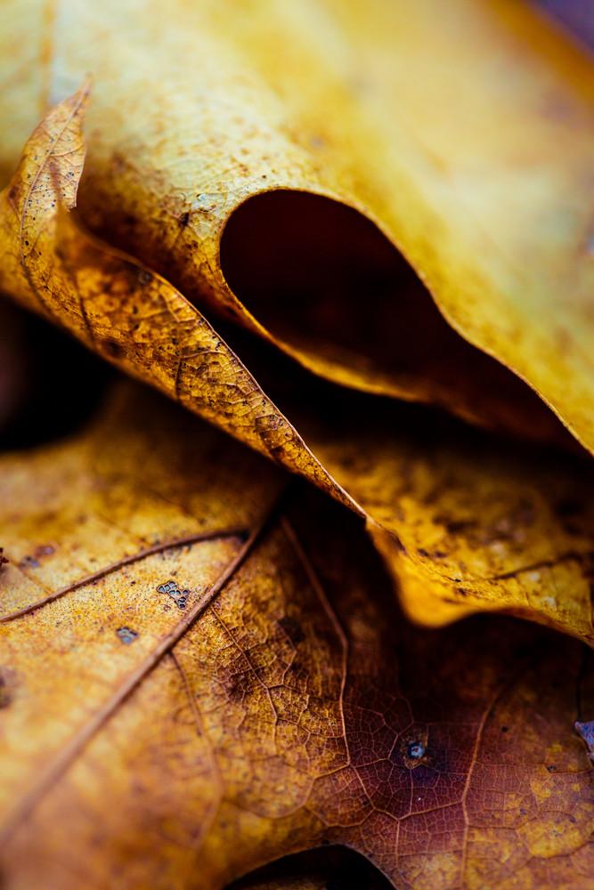 Nature Color 5608 Photography Art | Dan Chung Fine Art