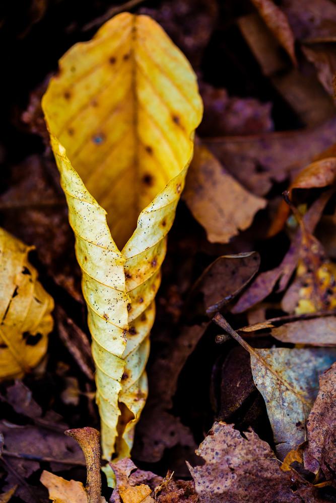 Nature Color 5623 Photography Art | Dan Chung Fine Art