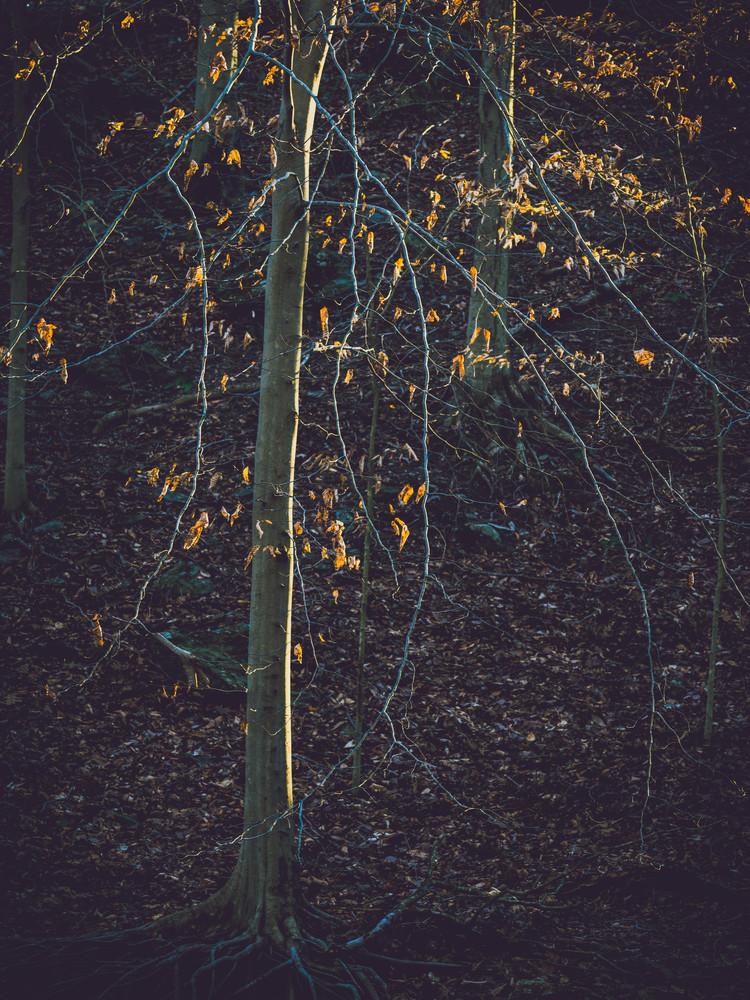 Nature Color 5875 Photography Art | Dan Chung Fine Art