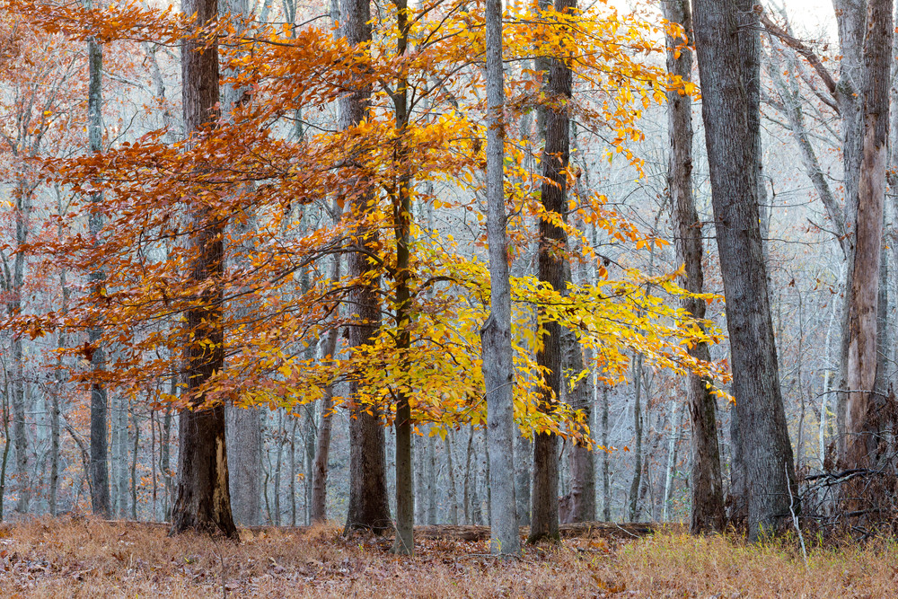 Nature Color 9930 Photography Art | Dan Chung Fine Art