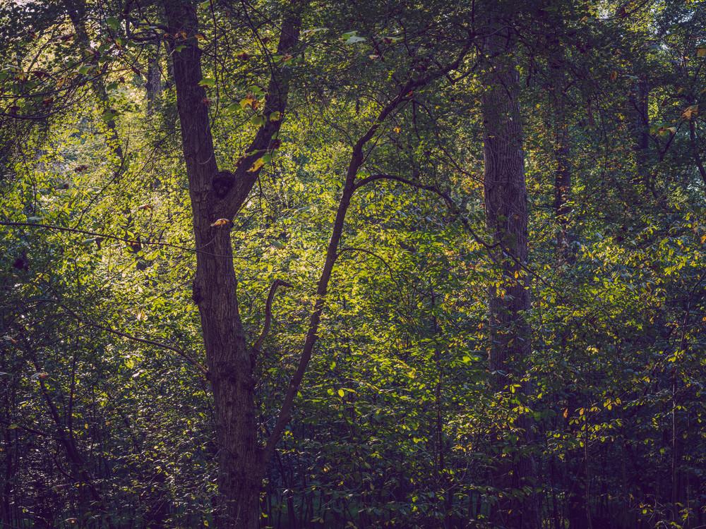 Nature Color 9396 Photography Art | Dan Chung Fine Art