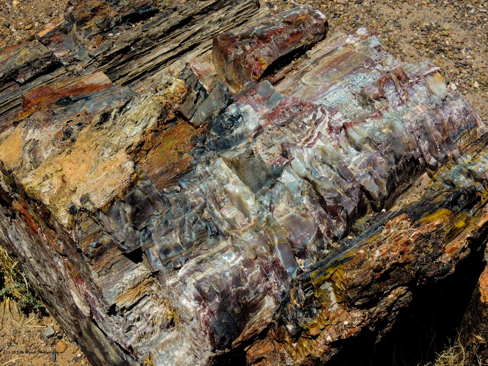 Petrified Log Photography Art | N2 the Woods Photography