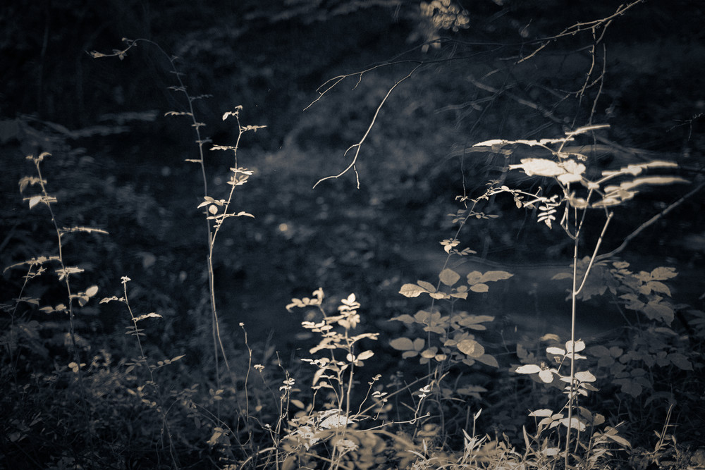 Nature Bw 4047 Photography Art | Dan Chung Fine Art
