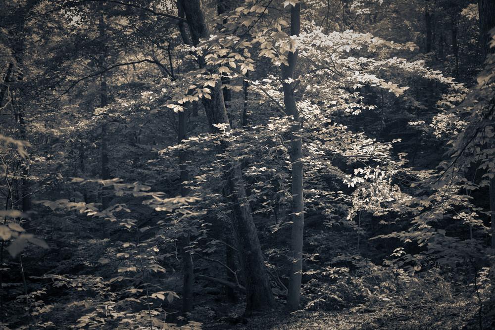 Nature Bw 4079 Photography Art   Dan Chung Fine Art