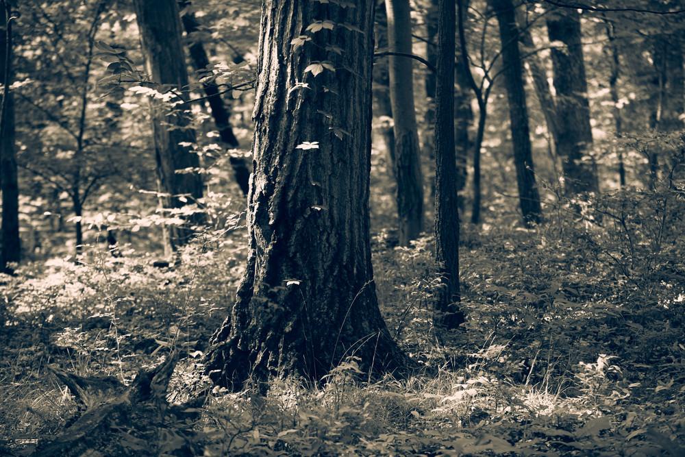 Nature Bw 5170 Photography Art | Dan Chung Fine Art