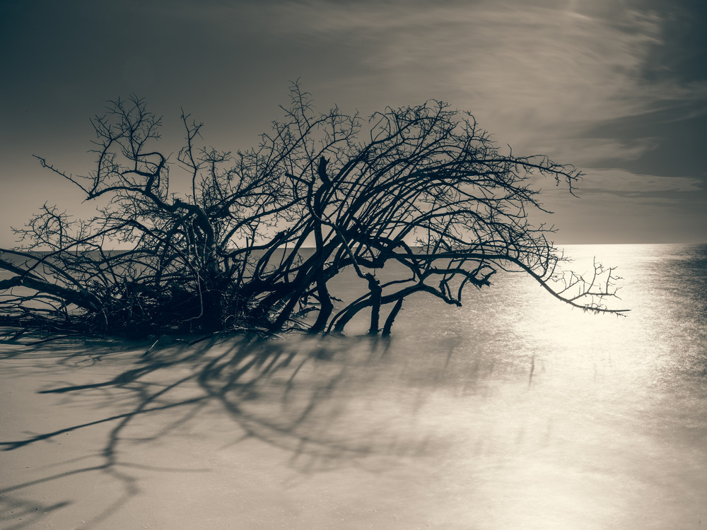 Nature Bw 8654 Photography Art | Dan Chung Fine Art