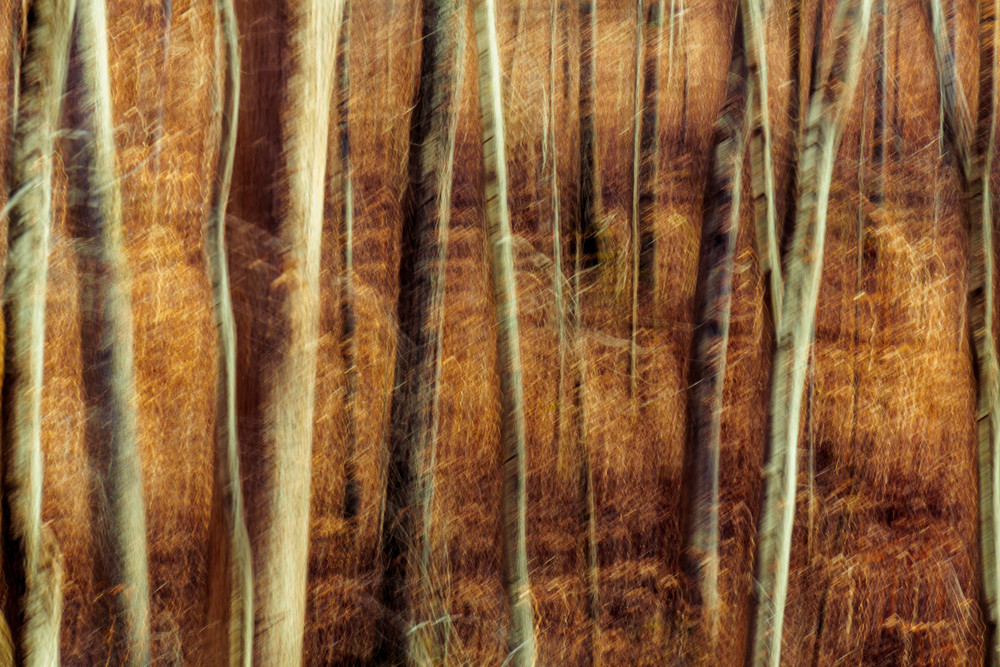 Nature Abstract 00099 Photography Art | Dan Chung Fine Art