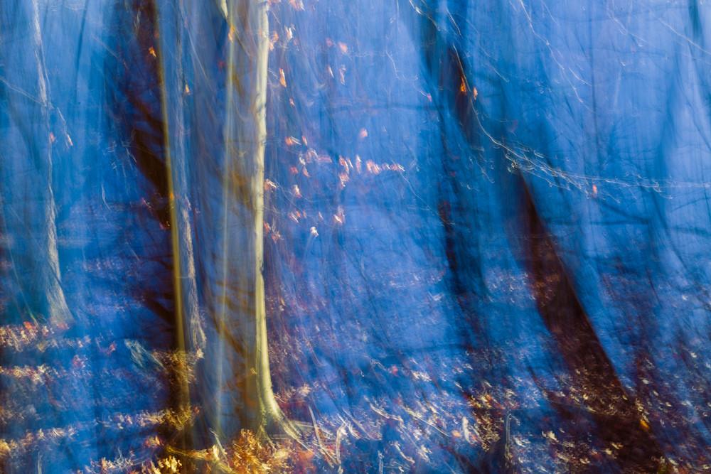 Nature Abstract 4630 Photography Art | Dan Chung Fine Art