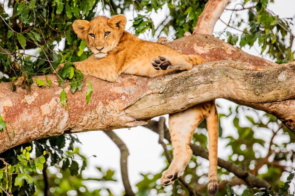 Tree Lounger Photography Art | Brokk Mowrey Photography