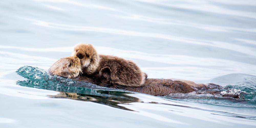Otter Kisses Photography Art | Brokk Mowrey Photography