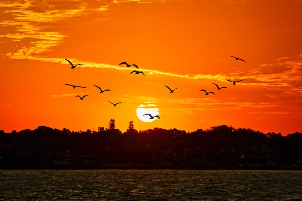 Sunrise Tampa Bay