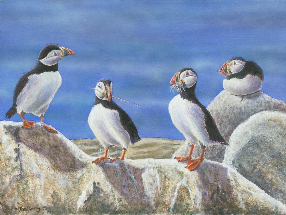 """The Suitors""   Atlantic Puffins Art 
