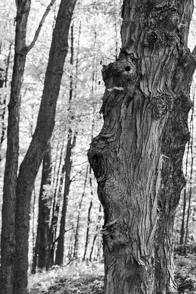 Tangled Nature Of Growing Things 6 Photography Art | Spry Gallery