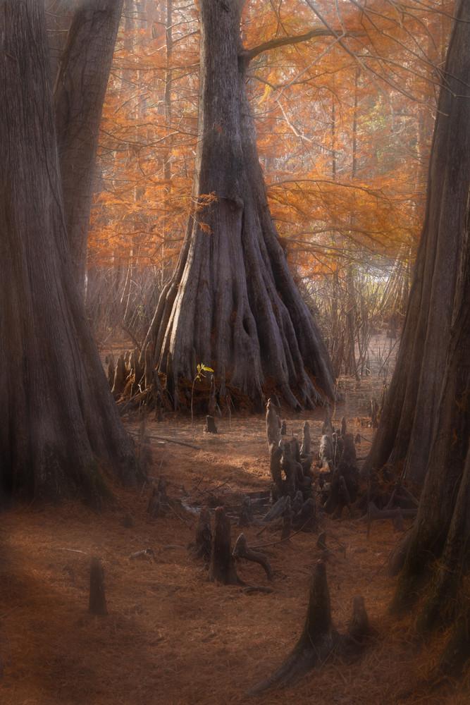 The Golden Road by Dan McCarthy