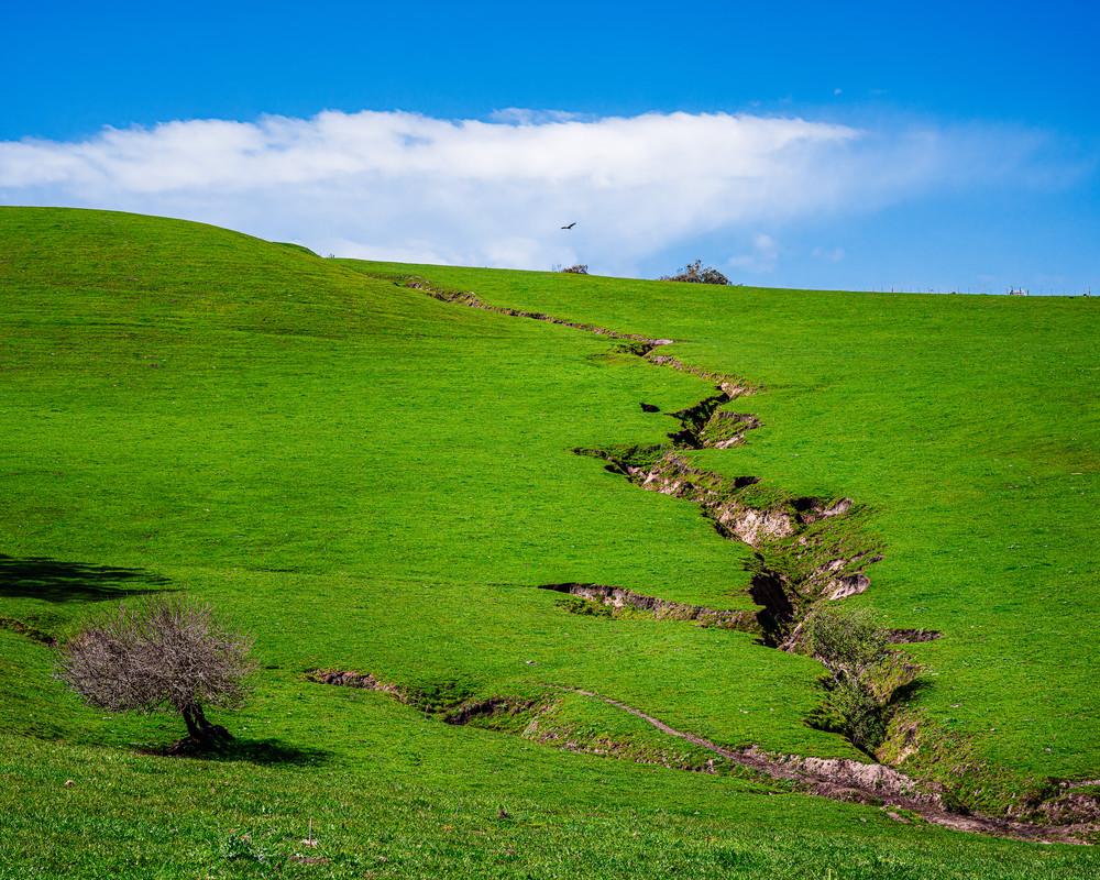 Pasture, California, 2020