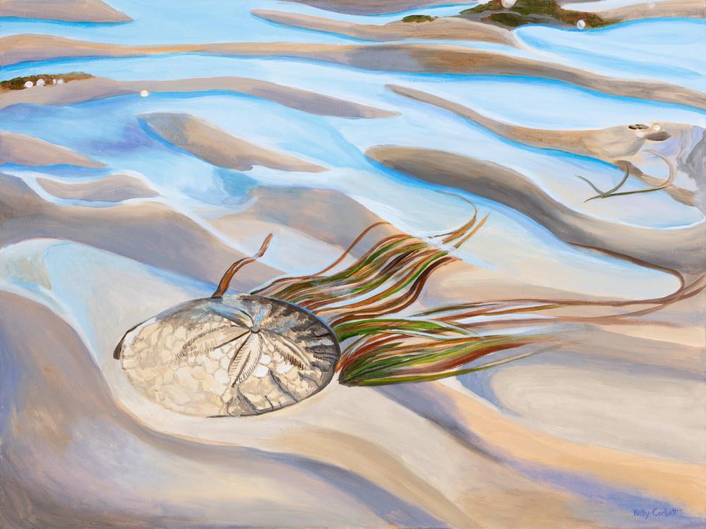 Sand Dollar Fine Art Print