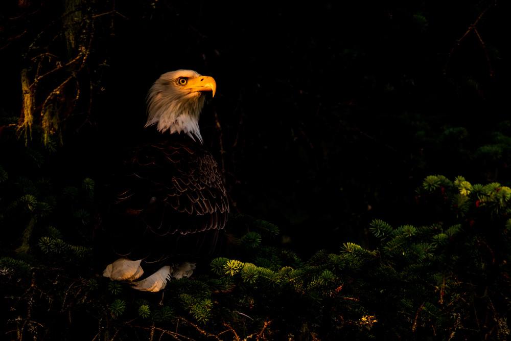 Freedom's Glow Photography Art | Brokk Mowrey Photography