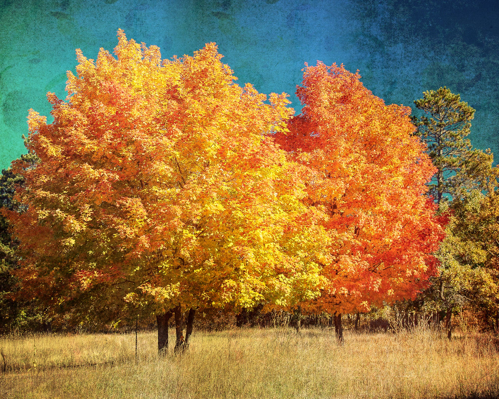 Fall Maple II, by Jeremy Simonson