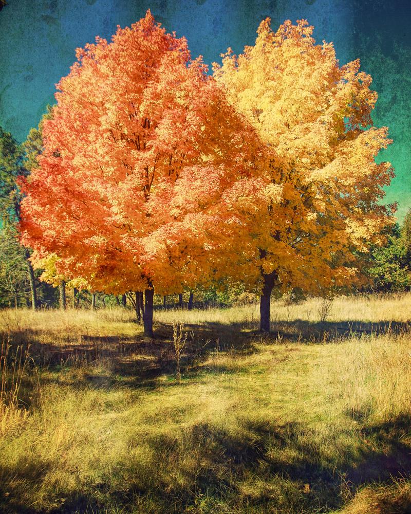 Fall Maple I, by Jeremy Simonson
