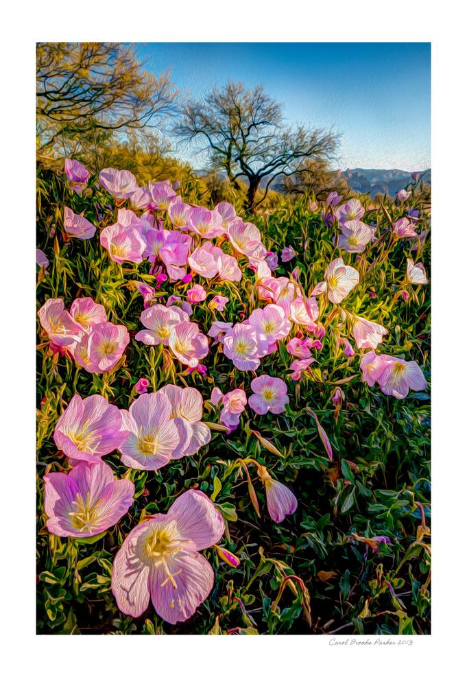 Sonoran Spring   Signed 2013 Photography Art   Carol Brooks Parker Fine Art Photography