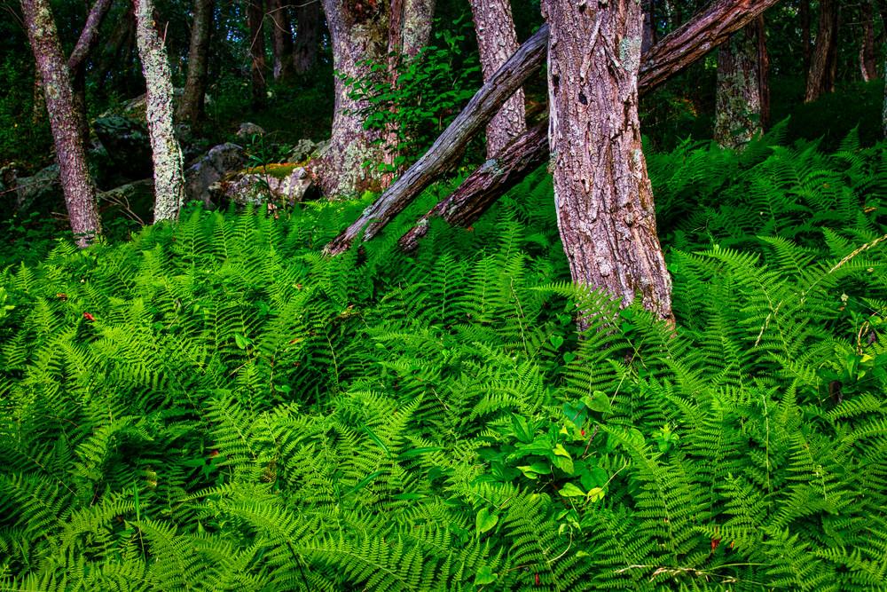 Shenandoah carpet - Shenandoah National Park fine-art photography prints