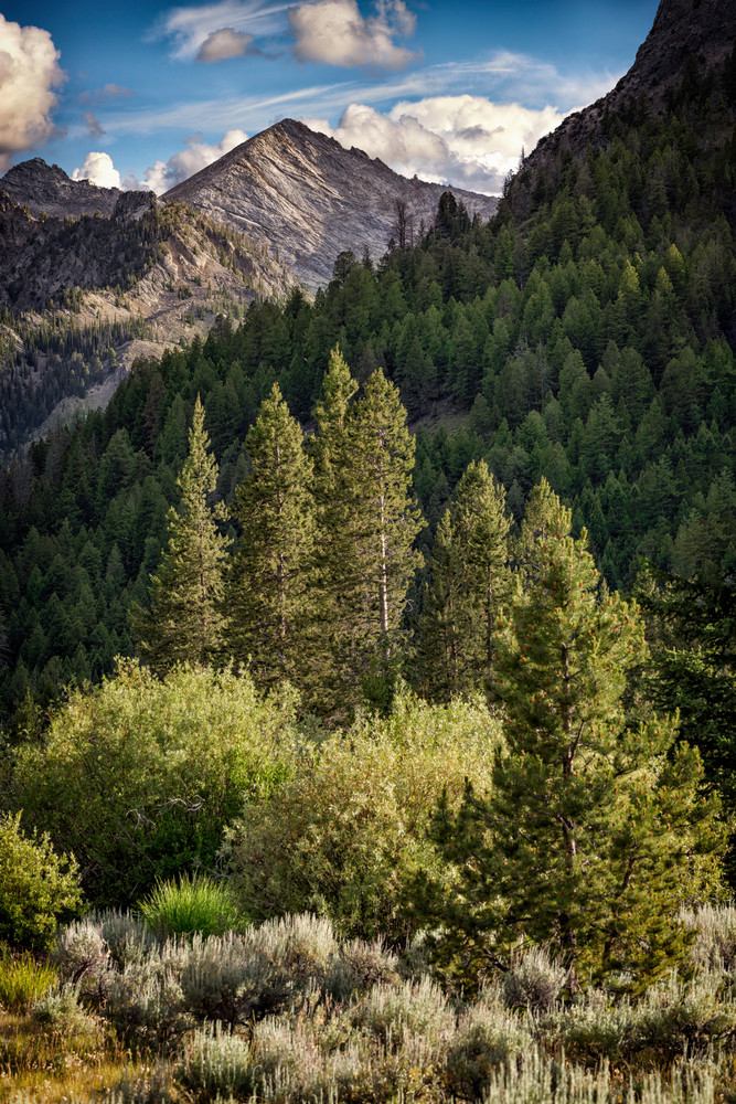 In The Pioneer Mountains   Shop Photography by Rick Berk