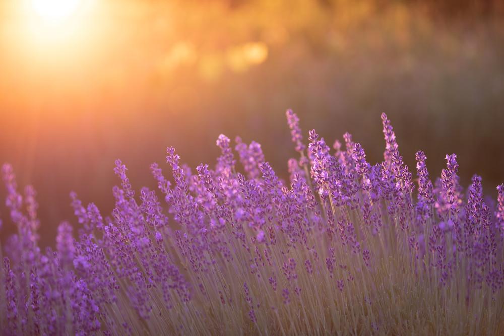 Sunset Aroma