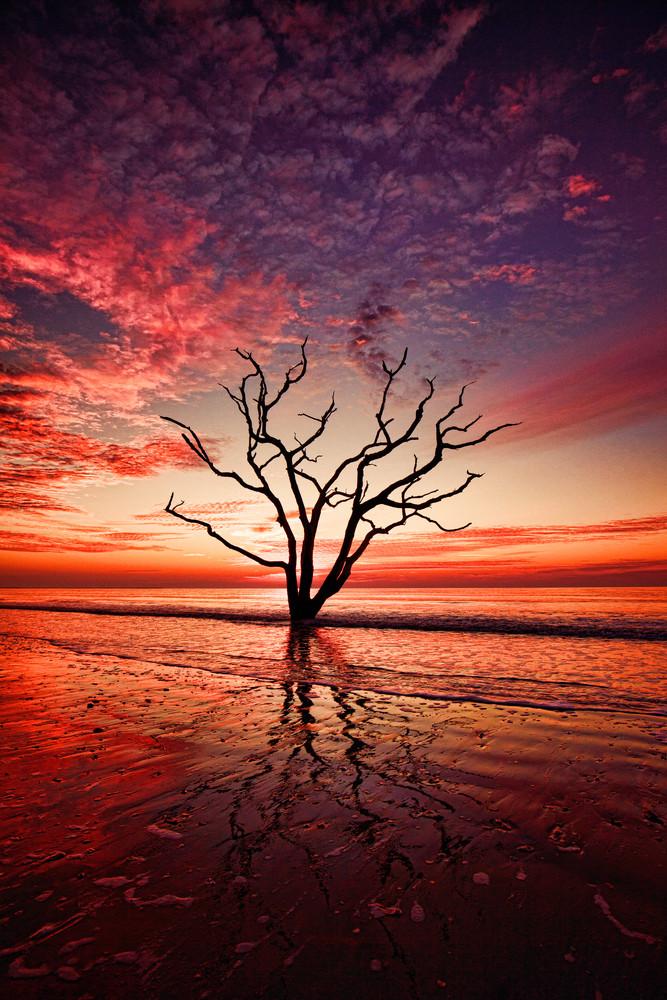 Boneyard Beach Tree