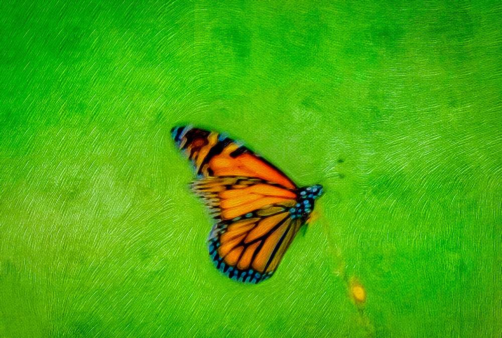 Monarch Impressions Art | Soaring Whales Photography LLC