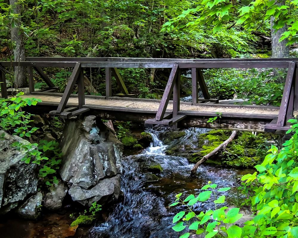 Hidden Treasure Photography Art | N2 the Woods Photography