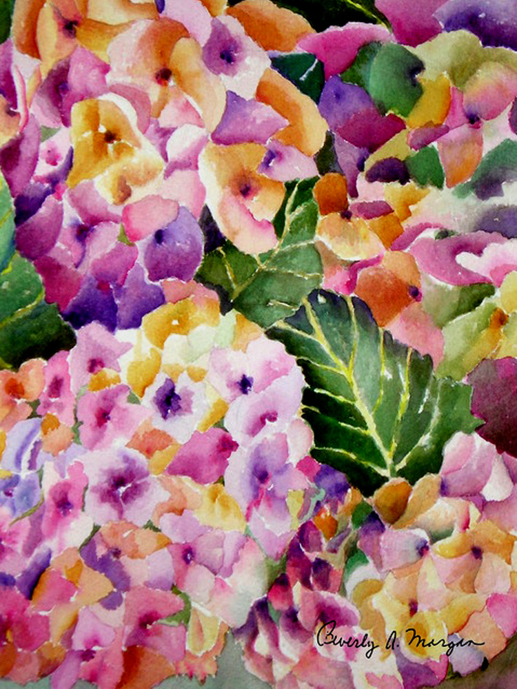 Hydrangea, From an Original Watercolor Painting