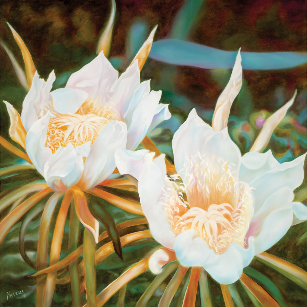 Night Blooming Cereus   Prints Art | Mercedes Fine Art